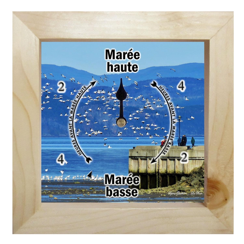 Horloge de marées (oie blanche)