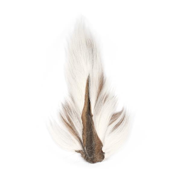 queue de chevreuil - blanche